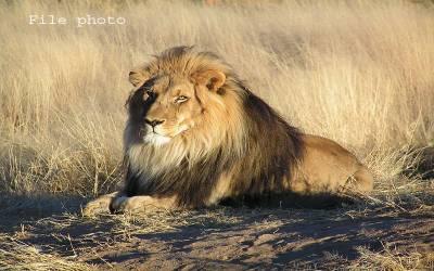 یو اے ای پاکستان کو 18 شیر تحفے میں دے گا