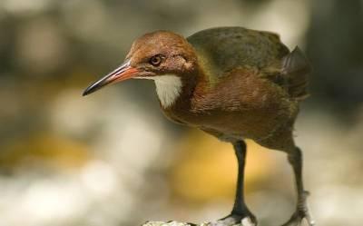 ایک لاکھ 36 ہزار سال پہلے ناپید ہوجانے والا پرندہ دنیا میں واپس آگیا، ہر کوئی حیران رہ گیا