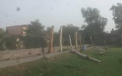 فیصل آباد میں قبضہ مافیا نے دن دیہاڑے پارک سے درختوں کا صفایا کردیا، دو ملزمان رنگے ہاتھوں گرفتار
