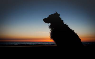 جانور بھی محفوظ نہ رہے، کتے کو اغوا کر کے جنسی زیادتی