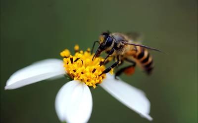 ایک شہد کی مکھی نے ائیرپورٹ سکیورٹی کی دوڑیں لگادیں، شہد کی مکھی فرار ہونے میں کامیاب، سکیورٹی میں تشویش کی لہر، لیکن کیوں؟ جانئے