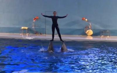 لاہور ڈولفن شو، یہاں مچھلیاں کیا کچھ کرتب کرتی ہیں ؟