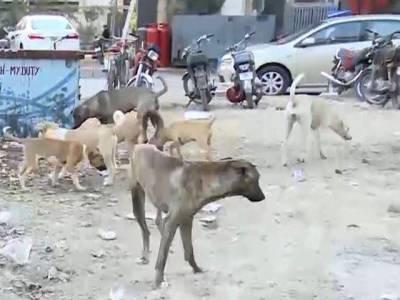 خیبر پختونخوا میں کتے کے کاٹنے کے علاج کی ویکسین نایاب