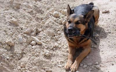 علاقے میں چوری ، سراغ رساں کتے لائے گئے تو وہ سیدھے کس عمارت میں گھس گئے ؟ جان کر پاکستانی ہنس ہنس کر لوٹ پو ٹ ہو جائیں گے