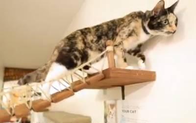 جنسی بے راہ روی کا شکار بلی کو گلوکوز کی ڈرپ لگانی پڑ گئی