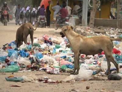 شہری خود بھی احتیاط کریں، بچے کتوں کو نہ چھیڑیں:صوبائی وزیر صحت سندھ کا عوام کو مشورہ