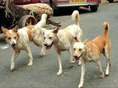 کتوں کو مارنے کا شرعی حکم کیا ہے؟ فتویٰ جاری کردیا گیا