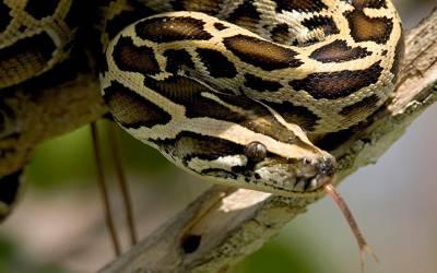 10 سال سے چھپ کر بیوٹی سیلون کی چھت میں بیٹھا سانپ بالآخر پکڑا گیا