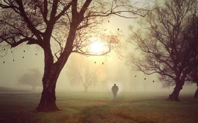 درخت کو نقصان پہنچانے پر 1کروڑ 20 لاکھ روپے جرمانہ