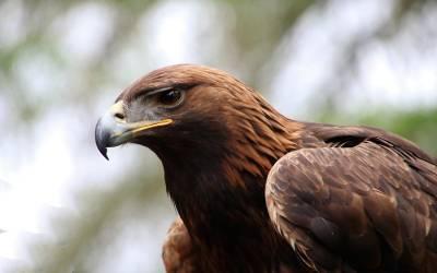 آسٹریلیا کے جنگلات میں آتشزدگی لیکن اس کا ذمہ دار کونسا پرندہ ہوسکتا ہے؟ سائنسدانوں کا ایسا خدشہ کہ آپ بھی دنگ رہ جائیں