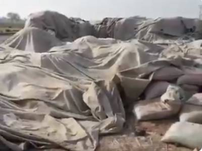 جیکب آباد کے فوڈ گودام سے چالیس کروڑ کی 87ہزار گندم کی بوریاں غائب ہونے کا انکشاف