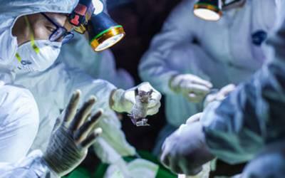 زخمی بچے کا کورونا وائرس زدہ ڈاکٹر سے علاج، اب کیا خطرہ لاحق ہو گیا؟ تہلکہ خیز دعویٰ