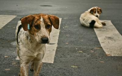 مدرسے سے واپس جانے والے 9 سالہ بچے کو 7 آوارہ کتوں نے نوچ ڈالا