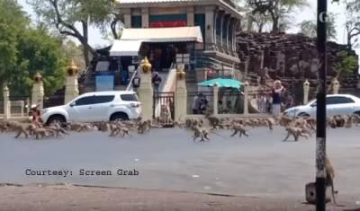 کرونا وائرس سے شہر کی سڑکیں ویران، سیاح غائب، بھوکے بندروں کے غول بھی باہر آگئے، ویڈیو وائرل