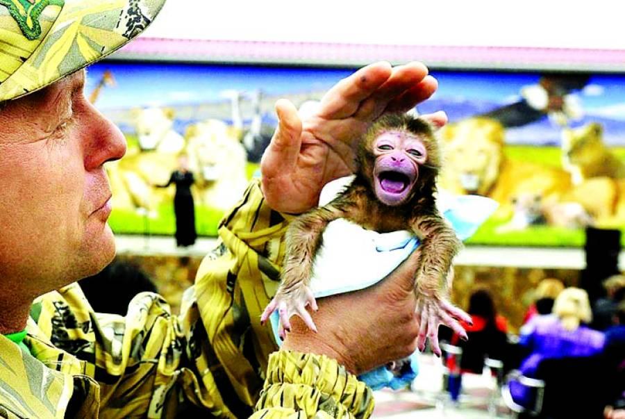 کریمیا: مقامی چڑیاگھر میں پیداہونے والے بندرکے بچے کو ایک شخص نے ہاتھوں میں اٹھایاہواہے