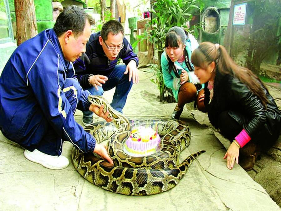 ہنان: ایک خاندان کے افراد پالتو اژدھا کی بیسوی سالگرہ پر کیک کاٹ رہے ہیں