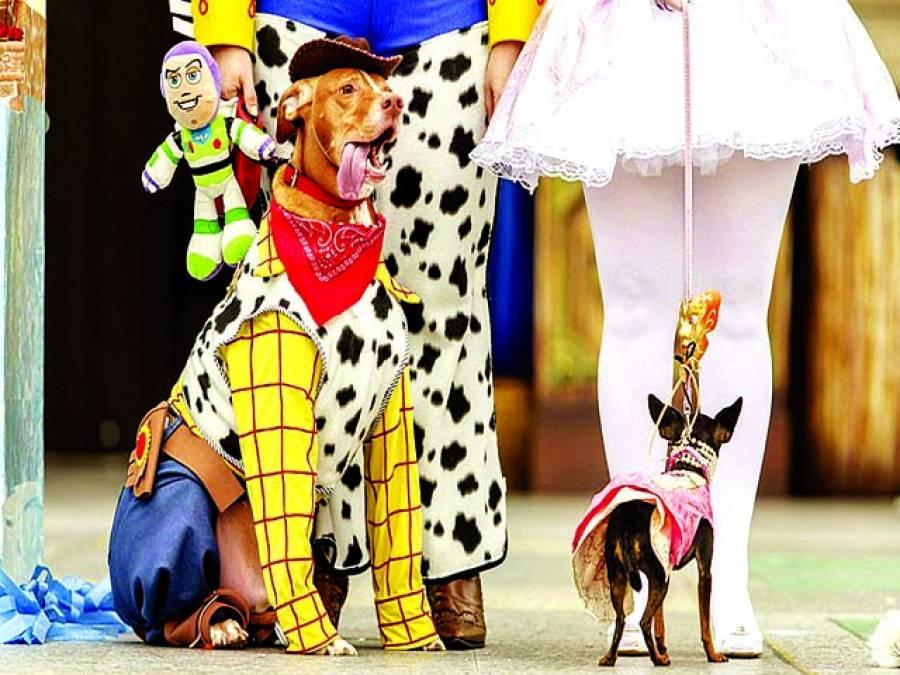لندن: کتوں کیلئے منعقد کئے گئے شو میں ایک کتا کپڑے پہنے بیٹھا ہے