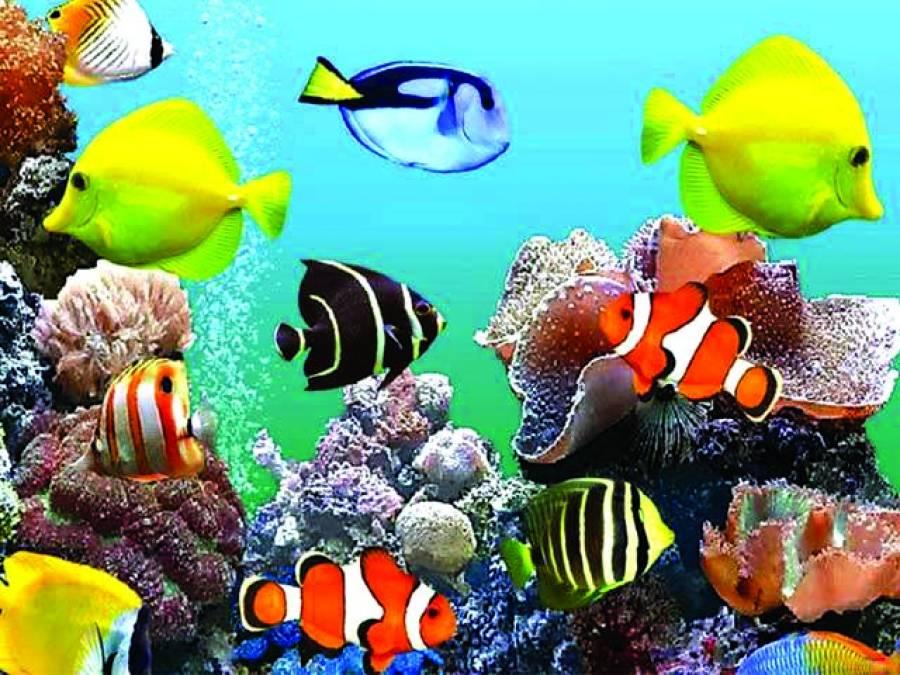 مچھلیوں کا تھری ڈی سکیننگ کے ذریعے آن لائن ڈیٹا اکٹھا کرنے کا منصوبہ