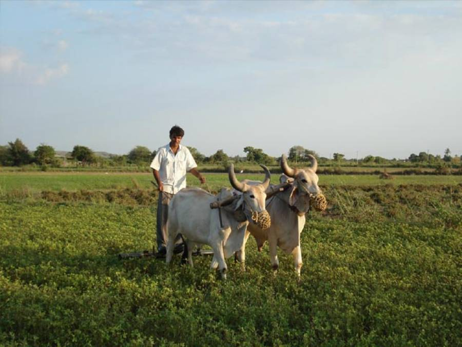 تباہ حال زراعت اور فریادی کسان