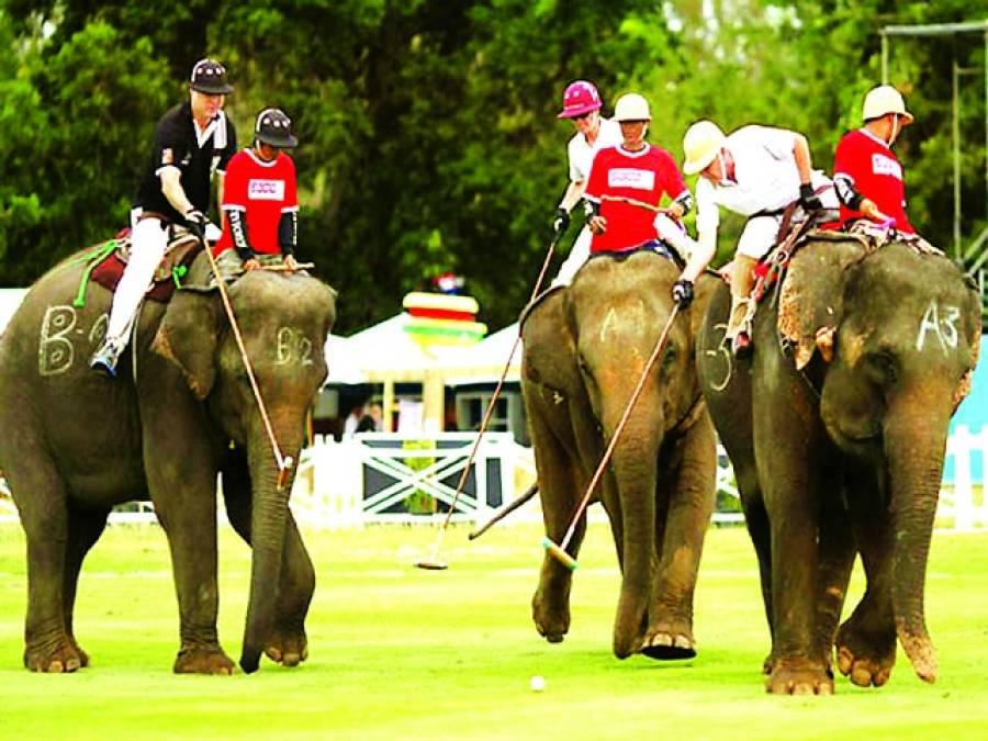 نیپال میں ہاتھیوں کا دلچسپ پولو ٹورنامنٹ کا انعقاد،12ٹیموں کی شرکت
