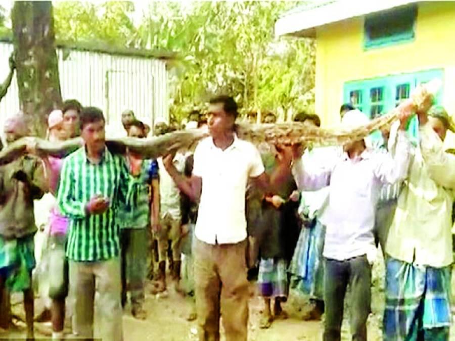 آسام ، دیہاتیوں نے لکڑیوں کی مدد سے 20فٹ لمبا سانپ پکڑ لیا