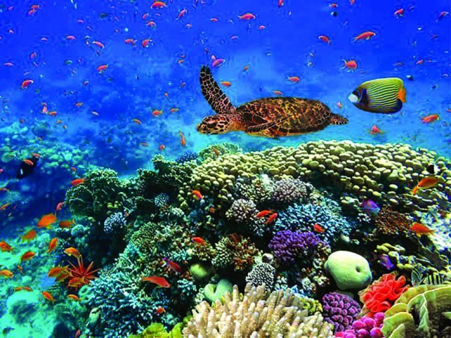 سمندروں میں آکسیجن کی کمی کا ذمہ دار کون؟