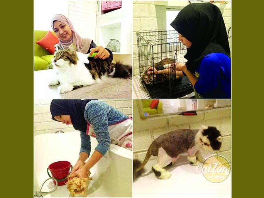 ملائیشیا میں بلیوں کیلئے عالیشان فائیو اسٹار ہوٹل