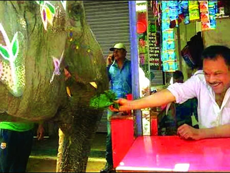 بھارت، مدھیاپردیش کی ہتھنی ''لکشمی''میٹھے پان کی شوقین