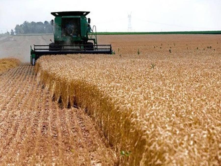 گندم خریداری مہم میں چھوٹے کاشتکاروں کا تحفظ
