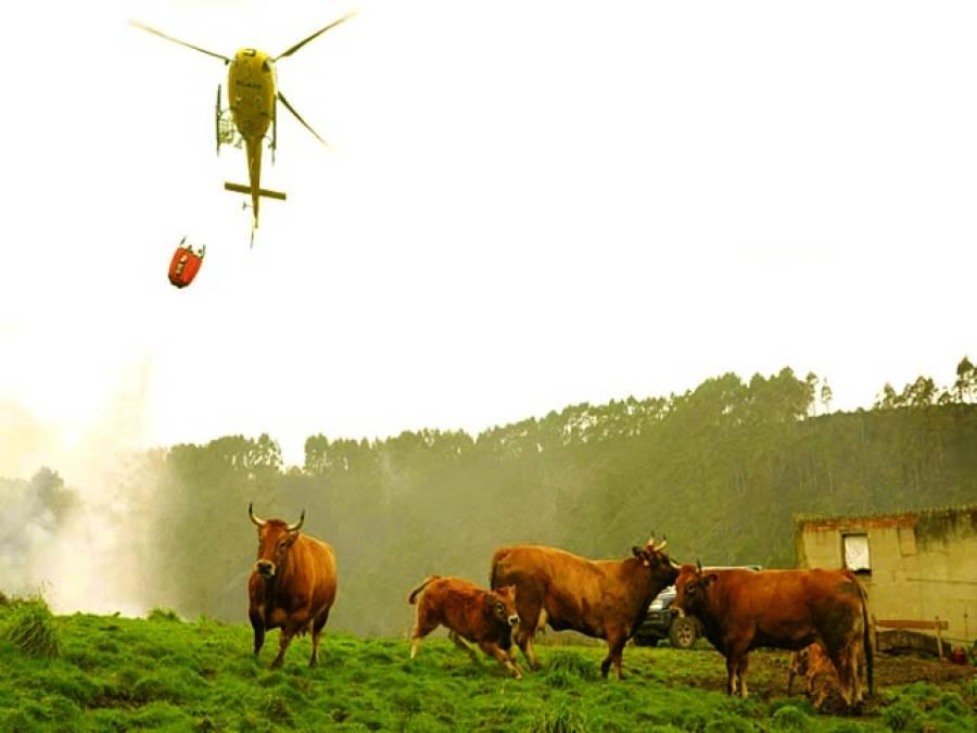 ویانا: آسٹریا میں ایک ہیلی کاپٹر جانوروں پر پانی پھینک رہا ہے۔