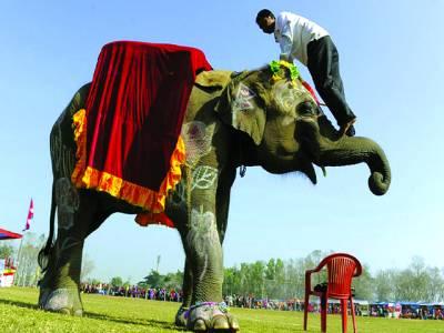 کھٹمنڈو: نئے سال کی آمد پر منعقدہ تقریب میں کرتب باز ہاتھی کو سونڈ پر چڑھا ہوا ہے
