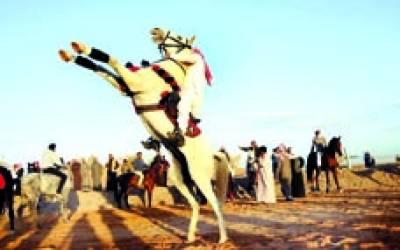 تبوک:گھڑ دوڑ میںشریک ہونے سے پہلے سعودی شخص اپنے گھوڑے کو تیار کر رہاہے