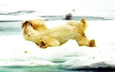 نارووے: ریچھ ارد گرد سے بے نیاز برف پر سویا ہو اہے