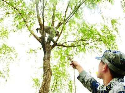 چین کی فوج نے مادرِ وطن کی حفاظت کیلئے بندروں کی بھرتی شروع کردی