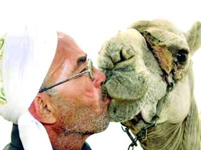 مہلک وائرس بھی عربوں کی اونٹوں سے محبت کم نہ کر سکا