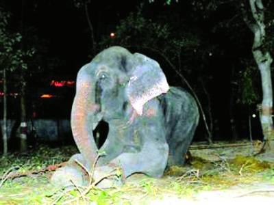 نیو دہلی، 50 سال بعد ہاتھی کو زنجیروں سے آزادی مل گئی