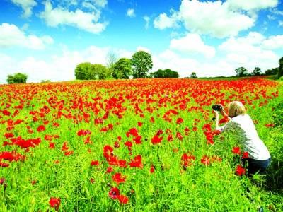 پیرس: خاتون فوٹو گرافر کھیت میں کھلے ہوئے پھولوںکی تصویر کھینچ رہی ہے