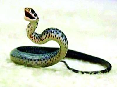 امریکی خاندان گھر میں موجود سانپوں سے تنگ