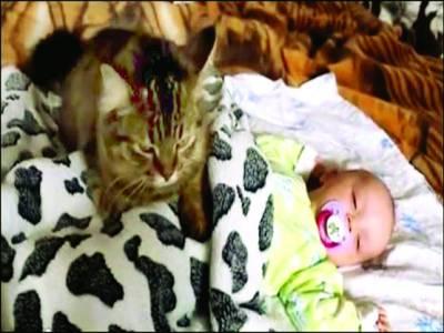 نیویارک،شیر خوار بچے کو ماں کی طرح سلانے والی بلی