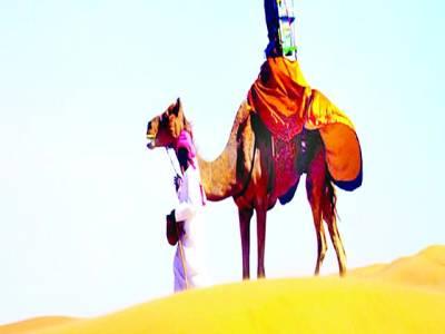 گوگل نے ابوظہبی کے صحرائی علاقوں کی تصاویر کیلئے ایک اونٹنی کو ملازمہ رکھ لیا