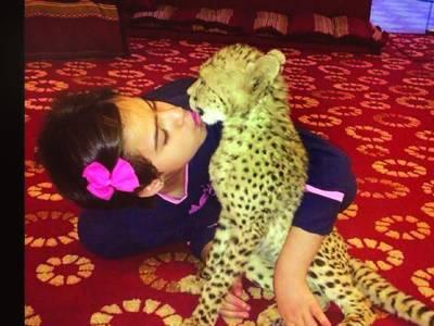 دس سالہ سعودی بچی کی گڑیوں سے کھیلنے کی عمر میں وحشی جانوروں سے دوستی