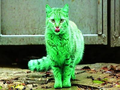 سکاٹ لینڈ: سبز رنگ کی بلی تصویر کھنچواتے ہوئے زبان نکالے کھڑی ہے