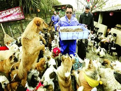 بیجنگ: چینی شخص کتوں میں کھانا تقسیم کر رہا ہے