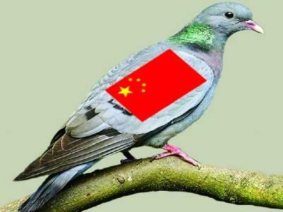 کبوتروں پر چین کے لئے جاسوسی کا الزام،بلا آخر باعزت بری