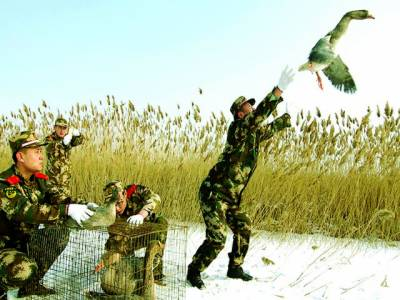 بیجنگ: فوجی اہلکار جنگلی پرندوں کو آزاد کر رہے ہیں