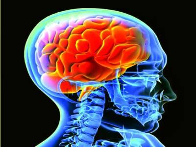 انسانی دماغ سردی میں زیادہ تیز چلتاہے یا گرمی میں ؟سائنس نے معمہ حل کر دیا