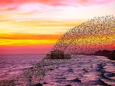 لندن: پرندوں کا غول ساحل سمندر کے قریب پرواز کر رہا ہے