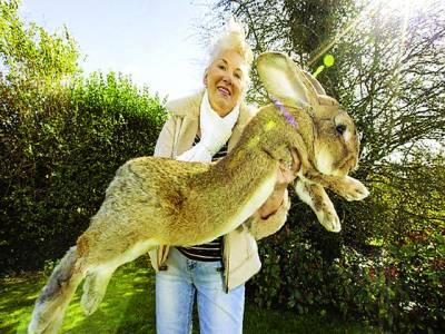ہیوی ویٹ چیلنج ٹائٹل،دنیا کے سب سے بڑے خرگوش کو شکست دینے کیلئے اس کا بچہ تیا ر