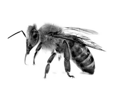 ایک مکھی جو دوبچوں کی جان لینے کا باعث بن گئی