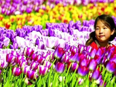 ایمسٹرڈیم: بچی باغ میں پھولوں سے کھیل رہی ہے
